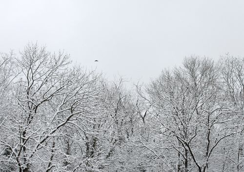 Web_Palmisch_winter_IMG_6279